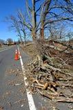 Branchement d'arbre tombé sur une route image stock
