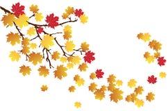 Branchement d'automne illustration de vecteur