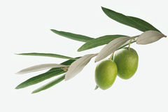 Branchement d'olives Images stock