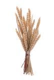 Branchement de blé Photos stock