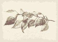 Branchement de bouleau illustration de vecteur