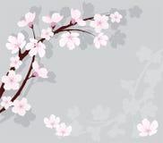 branchement de cerise de vecteur sur le fond gris illustration stock