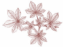 branchement de Châtaigne-arbre illustration stock