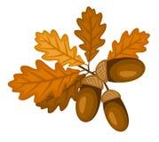 Branchement de chêne avec des lames et des glands. Illustra de vecteur illustration stock