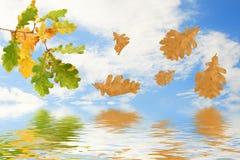 Branchement de chêne d'automne Photographie stock libre de droits