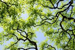 Branchement de ciel, de lumière du soleil, artistique et abstrait Photo libre de droits