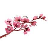 Branchement de floraison de cerise illustration de vecteur
