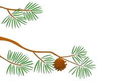 branchement de Fourrure-arbre illustration libre de droits