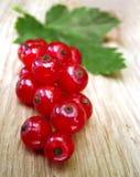 Branchement de groseille rouge Photo libre de droits