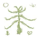 Branchement de l'arbre de sapin vert sunlit illustration stock