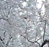 Branchement de neige images stock