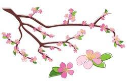 Branchement de pêche avec les fleurs attrayantes illustration de vecteur