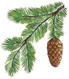 Branchement de pin illustration libre de droits