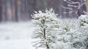 branchement de pin dans la neige Chutes de neige dans le Forest Park Paysage d'hiver en parc brouillé couvert de neige Vidéo de H banque de vidéos