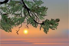 Branchement de pin et horizontal de l'hiver illustration libre de droits