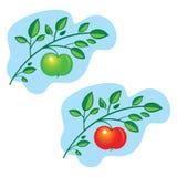 Branchement de pommier illustration stock
