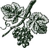 Branchement de raisin illustration de vecteur