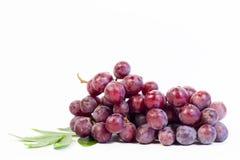 Branchement de raisin rouge d'isolement sur le fond blanc Photographie stock libre de droits