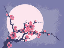 Branchement de Sakura contre le soleil illustration stock