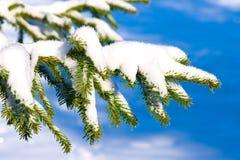 Branchement de sapin sous la neige photographie stock libre de droits