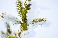 Branchement de sapin sur la neige Horizontal de l'hiver scène naturelle de neige photo libre de droits