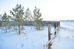 Branchement de sapin sur la neige Horizontal de l'hiver scène naturelle de neige photographie stock
