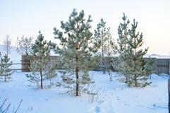 Branchement de sapin sur la neige Horizontal de l'hiver scène naturelle de neige images stock