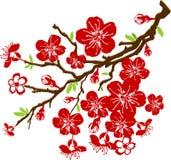 Branchement des fleurs de cerise illustration de vecteur