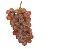 Branchement des raisins Image stock