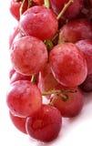 Branchement des raisins Image libre de droits
