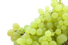 Branchement des raisins verts Photo stock