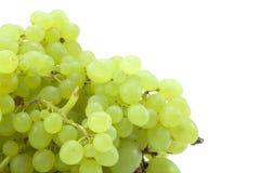 Branchement des raisins verts Images stock