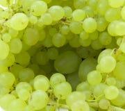 Branchement des raisins verts Photographie stock libre de droits
