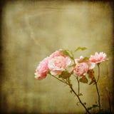 Branchement des roses sur une texture de cru image stock