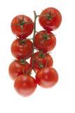 Branchement des tomates Image libre de droits