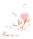 Branchement et libellule de magnolia Photographie stock