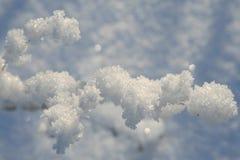 branchement et neige Photo stock