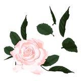 Branchement floral Rose et feuilles blanches de fleur Concept de mariage avec des fleurs illustration de vecteur