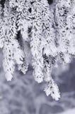 Branchement gelé 2 Photo libre de droits