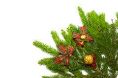 Branchement impeccable frais vert avec la décoration Photo stock