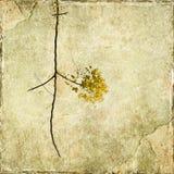 Branchement jaune de fleur photos stock