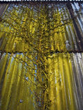 Branchement texturisé jaune 2 Photographie stock libre de droits