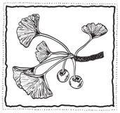 Branchement tiré par la main de biloba de Ginkgo avec des lames illustration stock