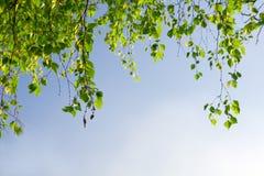 Branchement vert de feuillage et ciel bleu Photos stock