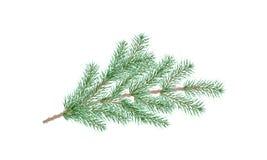 Branchement vert de pin Branche d'arbre de sapin illustration libre de droits