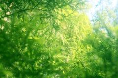 Branchement vert, forêt Image libre de droits