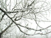 Branchements avec la neige Images stock