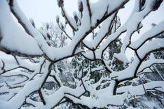Branchements avec la neige images libres de droits