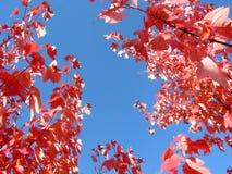 Branchements bleus lumineux de ciel et d'arbre d'automne photographie stock libre de droits