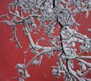 Branchements complètement de neige et de mur rouge photo stock